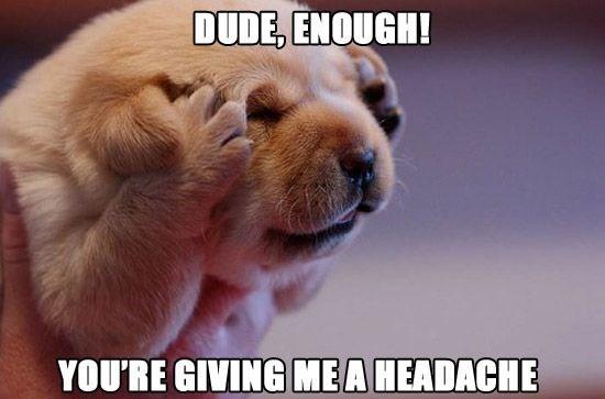 funny-headache-puppy-dog-dude-enough-paws-ears-cute-pics.jpg